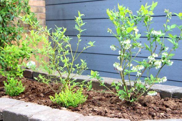 Tips til surbundsbed i haven