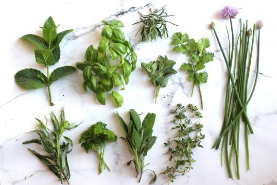 Hvilke krydderurter skal man dyrke indendørs