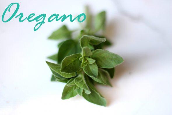 Hvad bruger man oregano til?